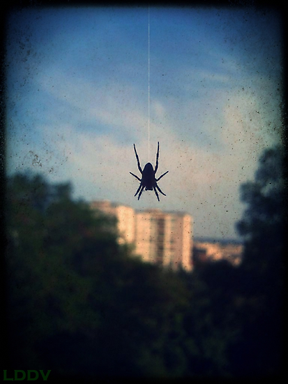 Spider by LeDormeurDuVol