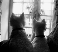 Waiting for mum, WESTIES by misslouiselucy