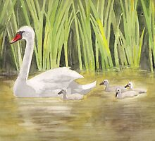 Swan family by Antje Bednarek