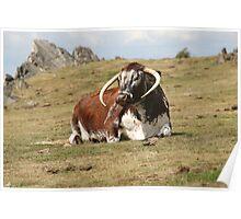 english longhorn Poster