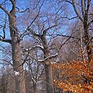 Old Trees in the snow by Shulie1