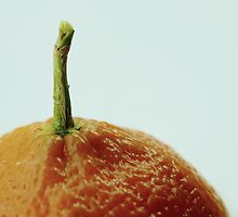 Tip of the Mandarin by Scott Mitchell