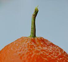 Tip of the Mandarin, Pt. II by Scott Mitchell