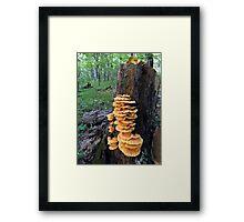 Yellow Shelf Mushrooms Framed Print