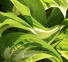 Need for Green by Kathilee