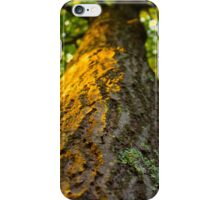 Golden Tree Trunk iPhone Case/Skin