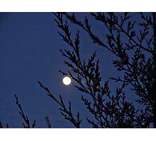 Moon Behind the Cedar Photographic Print