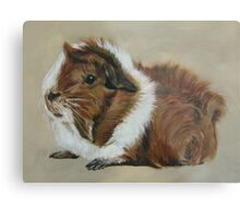 """Lucky"" Gorgeous Guinea Pig Metal Print"