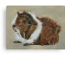 """Lucky"" Gorgeous Guinea Pig Canvas Print"