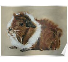 """""""Lucky"""" Gorgeous Guinea Pig Poster"""