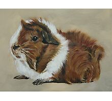 """""""Lucky"""" Gorgeous Guinea Pig Photographic Print"""