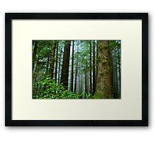 Coastal Redwoods Framed Print