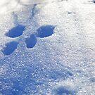 Rabbit Tracks by mwfoster