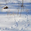 Small Rodent Tracks by mwfoster