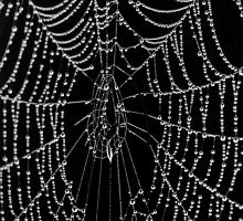 The Black Web by peaceofthenorth