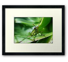 Gaudy grasshopper Framed Print