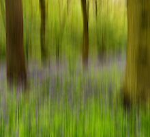 Bluebell Wood Abstract by English Landscape Prints