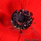 As Red As This by Nira Dabush