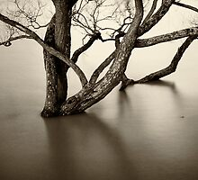 Flooded trees by Dave Hare