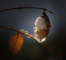 Icy leaf by Tom Klausz