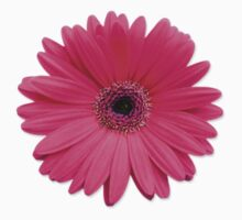 pink gerbera gerber daisy flower stickers by wasootch