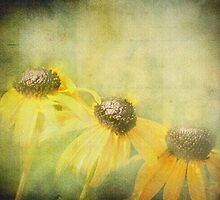 Black Eyed Susans by Diane Schuster