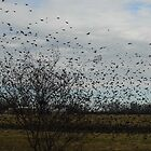 Four & Twenty THOUSAND Blackbirds by WildestArt