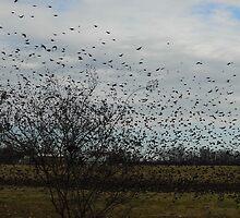 Four & Twenty THOUSAND Blackbirds by WildestArt