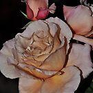 Julia's Rose by julie anne  grattan