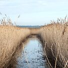 Reed Bed in Countryside by Sue Robinson