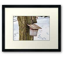Sap Bucket Framed Print