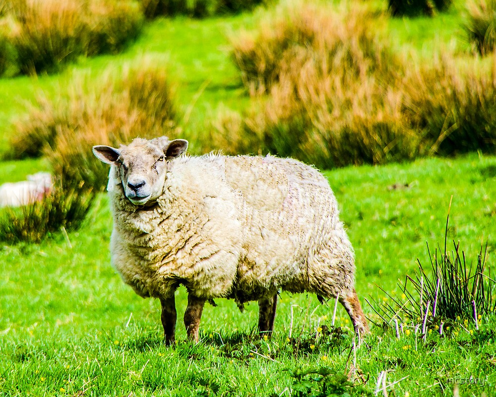 Portrait of a Sheep by Mary Carol Story