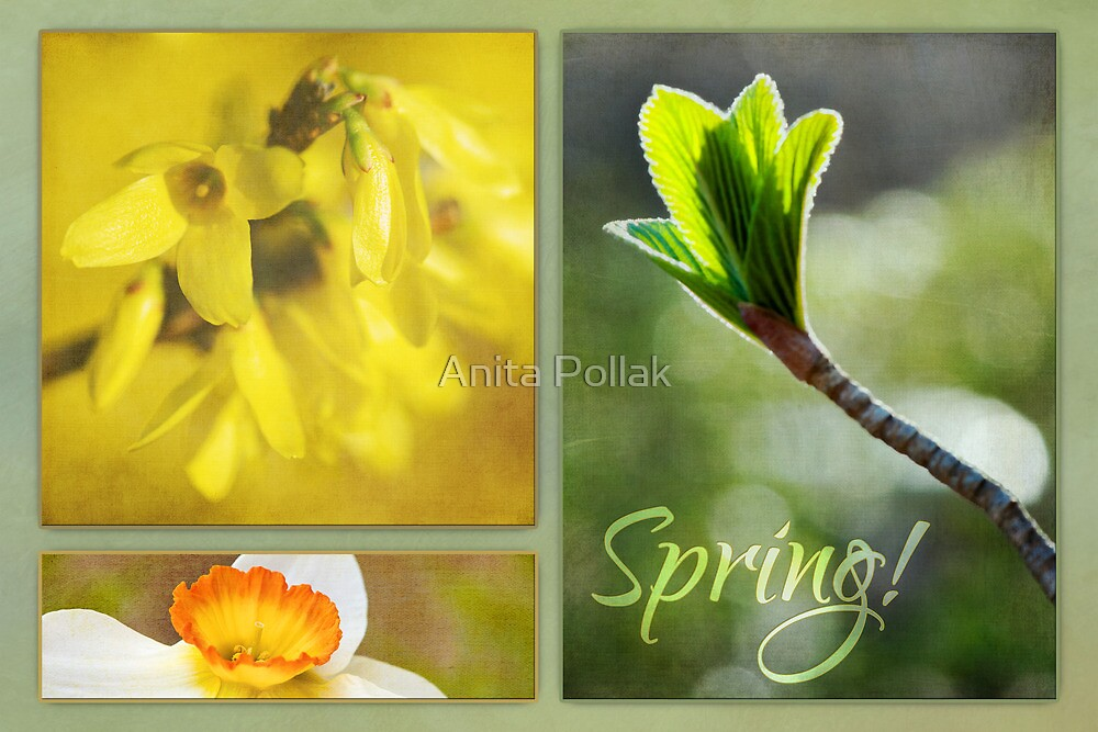 Tribute to Spring by Anita Pollak