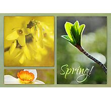 Tribute to Spring Photographic Print