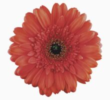 orange gerbera daisy flower floral sticker by wasootch