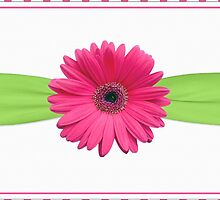 gerbera daisy flower hot pink green polka dot ribbon by wasootch