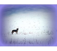 The Wild and the Free Photographic Print