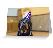 Happy Birthday from a Rottweiler Greeting Card