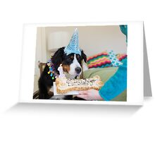 Bernese and the Birthday fun! Greeting Card