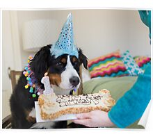 Bernese and the Birthday fun! Poster