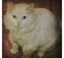 The vintage kitty Photographic Print