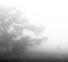 In The Mist by rgahris