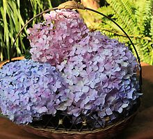 Hydrangeas in a basket by Maree  Clarkson