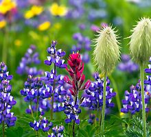 Wildflowers at Mount Rainier by Michael Russell