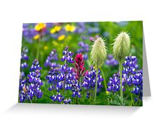 Wildflowers at Mount Rainier Greeting Card