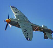Sea Fury - Shoreham - 2013 by Colin  Williams Photography