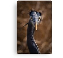 Kinda Looks Like a Mad Scientist, Doesn't He!! Canvas Print