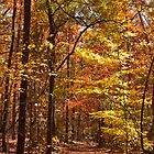 Autumn - Sweetwater Creek State Park by Evelyn Laeschke