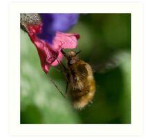 Hovering Bee Art Print