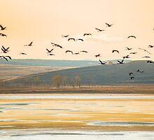 Migration by Anibal Trejo